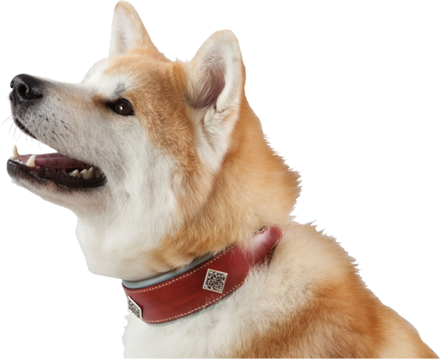 collier chien akita inu en cuir
