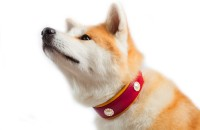 Collier chien Rose Berry