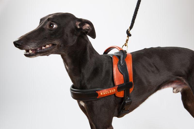 Harnais pour chien en cuir avec poignée - Atelier Napoléon
