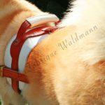 Harnais chien Sportclassic - gamme Confort+