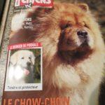 Vos chiens magazine - Atelier Napoléon - Chow chow