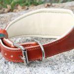 collier lévrier avec doublure moelleuse - Atelier Napoléon
