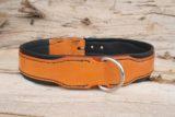 Collier chien orange