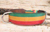 Collier chien tricolore